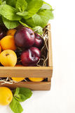 Fresh apricots and plums in wooden box Stock Photos
