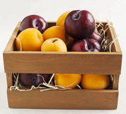 Fresh apricots and plums in wooden box Royalty Free Stock Photo