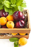 Fresh apricots and plums in wooden box Stock Image
