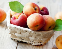 Fresh Apricots. Fresh Ripe Apricots in a Basket Stock Images