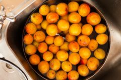 Fresh Apricots In The Water Stock Photos