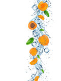 Fresh apricots with water splash. Royalty Free Stock Images