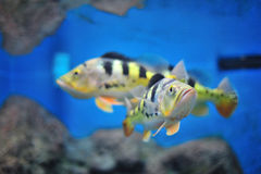 Fresh Aquarium Stock Photography
