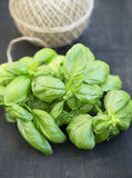 Fresh Aromatic Basil Herb Stock Photo