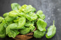 Fresh Aromatic Basil Herb Stock Photos
