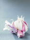 Fresh aromatic garlic cloves. In a broken open bulb on a vertical grey background with copyspace Stock Images