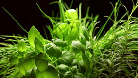 Fresh aromatic herbs(basil,rosemary,chives)isolated on black background, rotating stock video footage