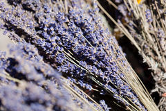 Fresh aromatic lavender in basket macro outdoor Royalty Free Stock Photography