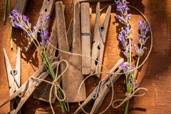 Fresh and aromatic lavender ready to dry in summer. On wooden table stock photos