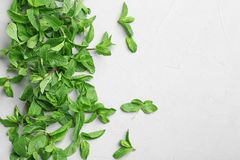 Fresh aromatic mint on light background. Top view Stock Photography