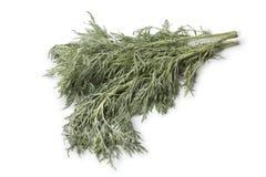 Fresh Artemisia Absinthium Stock Image