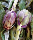Fresh artichoke Stock Images