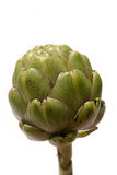 Fresh Artichoke. A fresh, green artichoke isolated on white Stock Photo