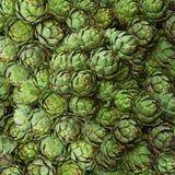 Fresh artichokes Royalty Free Stock Image