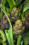 Fresh artichokes at farmers market Stock Photos