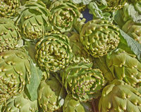 Fresh artichokes for sale Stock Image