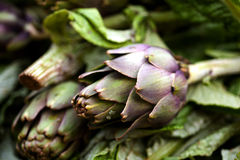 Fresh artichokes sold at a market Stock Photography