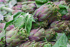 Fresh artichokes sold at a market Royalty Free Stock Photography