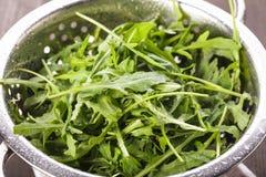 Fresh arugula Stock Image
