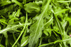 Fresh arugula Stock Photos