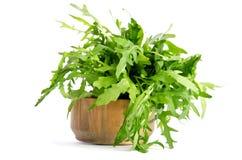 Fresh arugula beam in wooden salad bowl Stock Images
