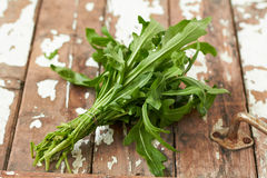 Fresh arugula Royalty Free Stock Photos