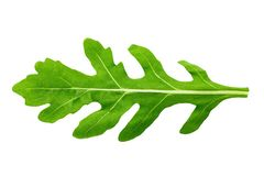 Fresh arugula clipping path. One leaf of arugula on a white background isolated. clipping path stock image