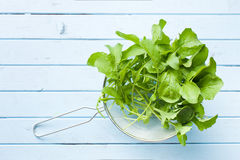 Fresh arugula leaves. Top view of fresh arugula leaves on kitchen table stock photography