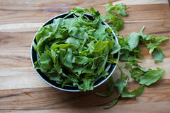Fresh Arugula ready for a Summer Salad. Healthy greens fresh from the garden Royalty Free Stock Photo