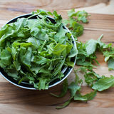Fresh Arugula ready for a Summer Salad. Healthy greens fresh from the garden Stock Images