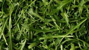 Fresh arugula full frame. Fresh arugula salad use for background, full frame stock footage