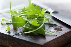 Fresh arugula Royalty Free Stock Photography