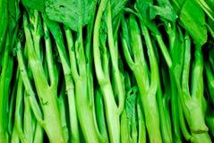 Fresh asian kale vegetables Stock Image