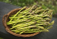 Fresh asparagus in basket Royalty Free Stock Image