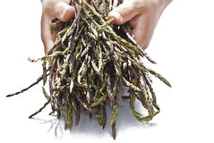 Fresh asparagus in his hands Royalty Free Stock Photos