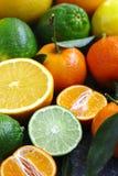 Fresh assorted citrus fruits Stock Photos