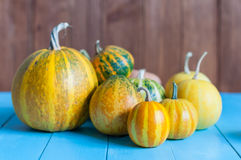 Fresh assorted pumpkin and squash from autumn Royalty Free Stock Photos