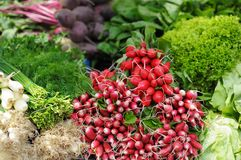 Fresh assorted vegetables and herbs Royalty Free Stock Photos