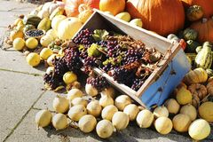 Composition of colorful vegetables. Pumpkin, grapes, zucchini. royalty free stock images