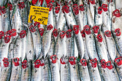 Fresh atlantic bonito for sale. At a market in Istanbul Royalty Free Stock Image