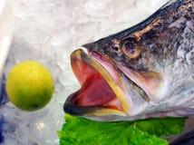 Fresh Atlantic Salmon Fish, Sydney Fish Markets, Australia. A fresh farmed Atlantic Salmon fish, on ice at the Sydney Fish Markets, Pyrmont, New South Wales, NSW Stock Image