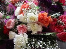 Fresh attractive colorful bouquets of carnation flowers on display. In town, Canada stock image