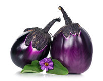 Fresh aubergine Royalty Free Stock Photo