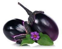 Fresh aubergine Stock Images