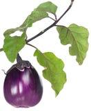 Fresh aubergine Stock Image