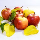 Fresh autumn apples Stock Images