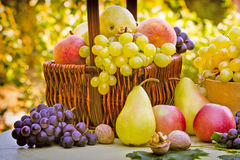 Fresh Autumn Fruits Stock Photo
