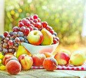 Fresh autumn fruits royalty free stock photography