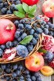 Fresh autumn fruits Stock Image