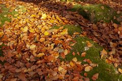 Fresh autumn leaves fallen on a bed of moss stock photography